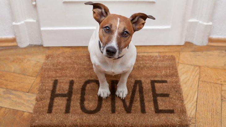 犬にとって快適な『住環境』とは?