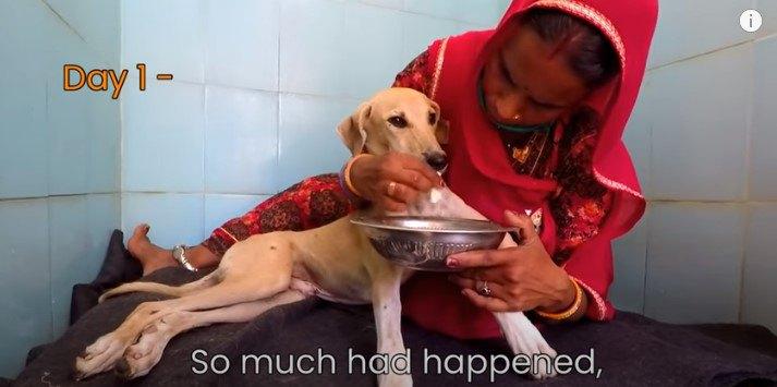 痛みで歩けない…草むらに隠れていた犬は諦めない心で奇跡を起こす