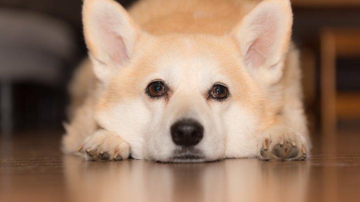 犬が反抗期のときに見せる4つ仕草や行動