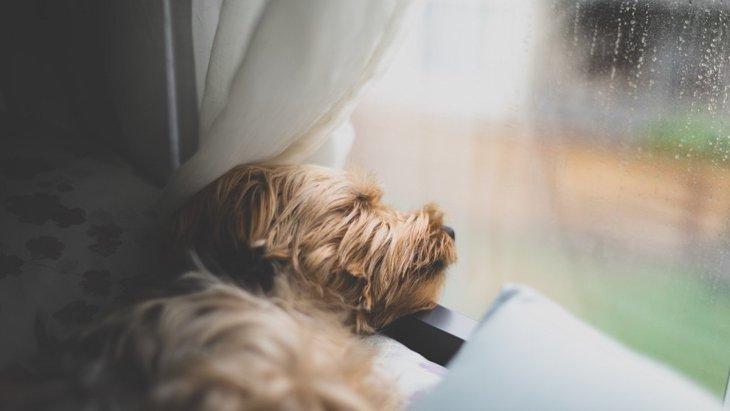 室内犬ならではの『ストレス4選!部屋飼いゆえに与えてしまう理由とは
