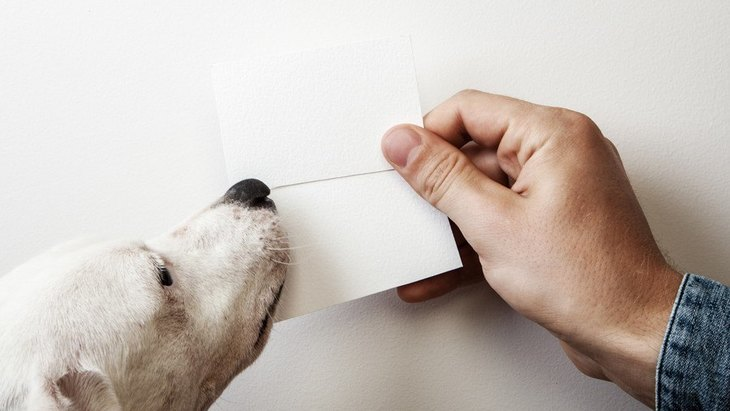 ペット名刺の作成、デザイン、印刷にオススメの業者5選