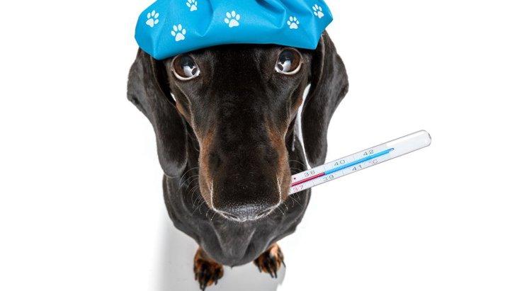 犬インフルエンザとは?対処法5つや予防接種の受け方を徹底解説