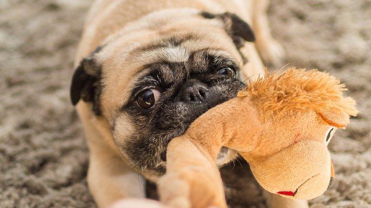 犬がおもちゃを噛む心理とは?安全な管理方法まで