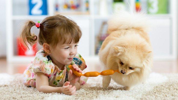 犬が人に対して友好的な2つの理由