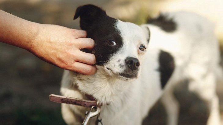 犬と絶対に仲良くなれない人の特徴5選!嫌われる人は必ずこんなことをしている