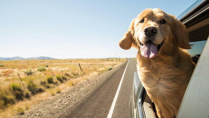 犬を車内で自由にさせたら「道交法違反」!?安全な乗せ方とは