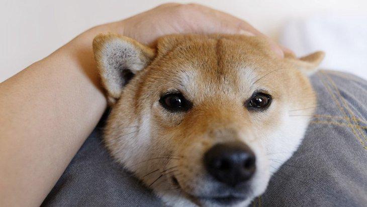 犬が飼い主に顔をぶつけてくる心理3つ