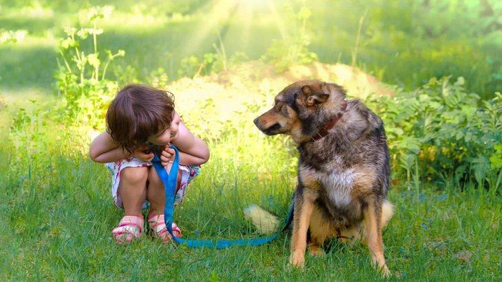 子供をあやしてくれるときの犬の気持ちとは?