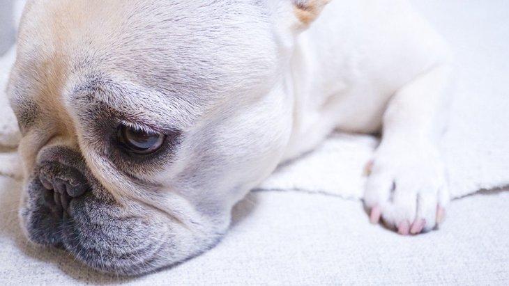 犬が飼い主に謝っている時にする仕草や態度3選