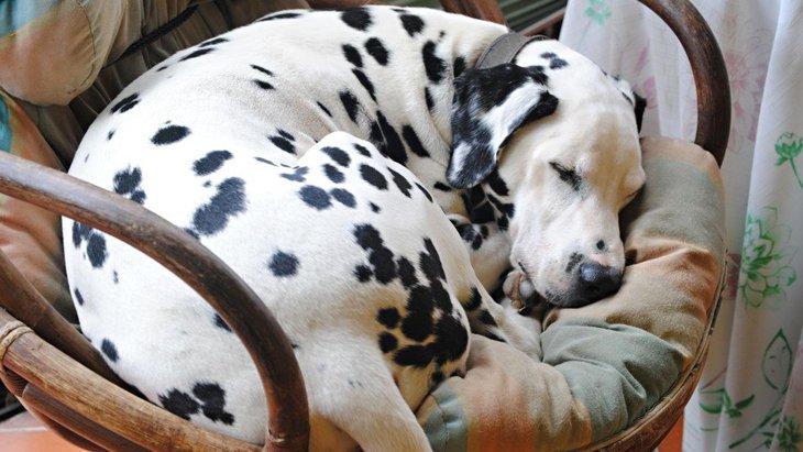 犬が『そっとしておいて欲しい時』に見せる仕草や態度5選