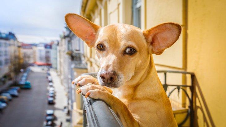 アメリカで発表された「犬に優しい街」ランキングから考える
