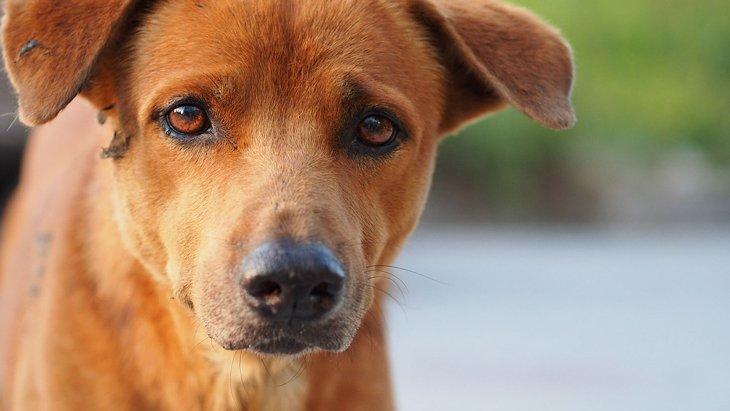 犬の精巣腫瘍について ~症状と原因、治療や予防法~