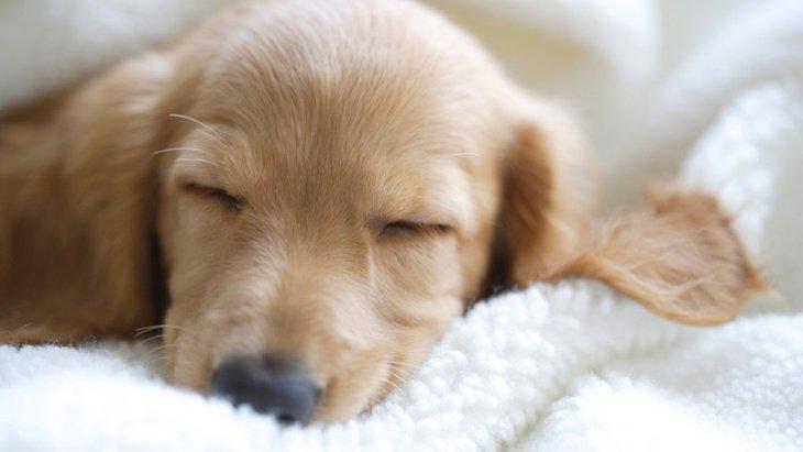 犬が寝言を言う4つの心理
