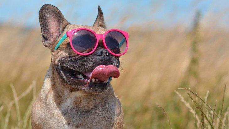 犬の『暑いサイン』3選!必ず見極めて熱中症予防を!