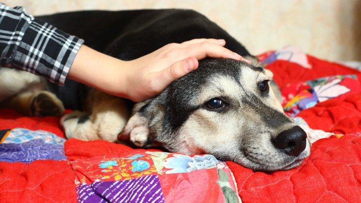 犬が吐くような仕草をする原因と考えられる病気