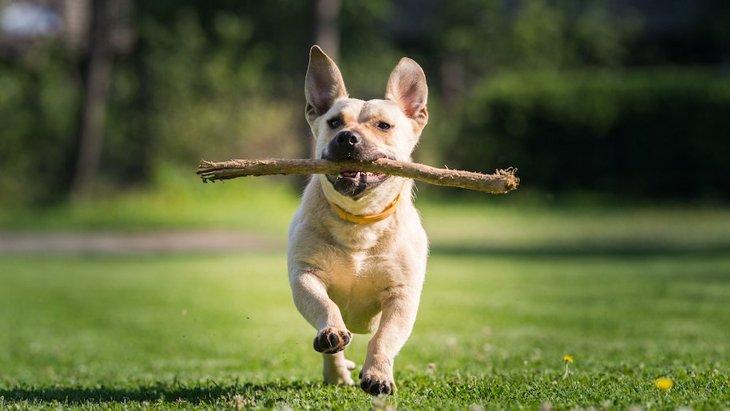NZのドッグパークにオープンした犬のための『木の枝図書館』
