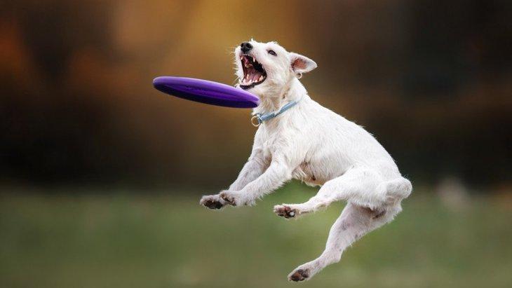 『不器用な犬』がよくする行動4つ