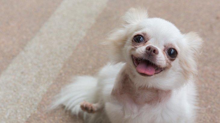 犬が笑顔になる3つのタイミング
