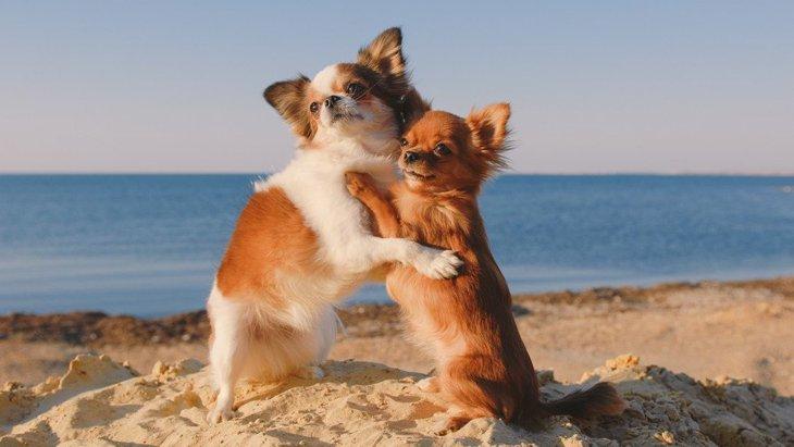 犬の多頭飼いで注意すべき生活のポイント5つ