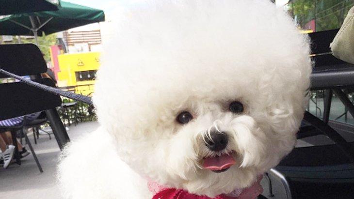 白くて丸くてモフモフ!360度どこから見ても丸い犬がかわいすぎる!(まとめ)