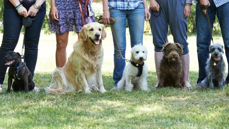 犬をしつけ教室に通わせる3つのメリット