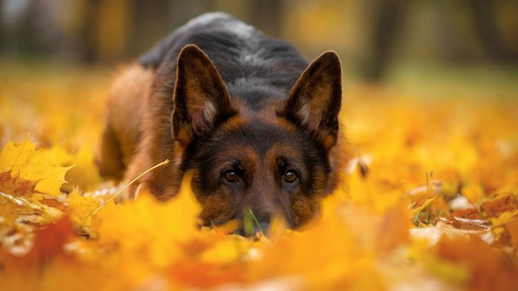 犬が『楽しんでいない時』にする仕草や行動5選