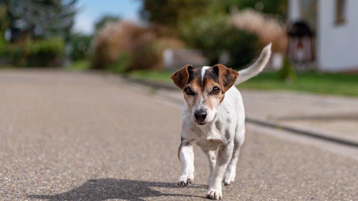 こんな時気をつけて!犬が『散歩中にしやすい怪我』5選