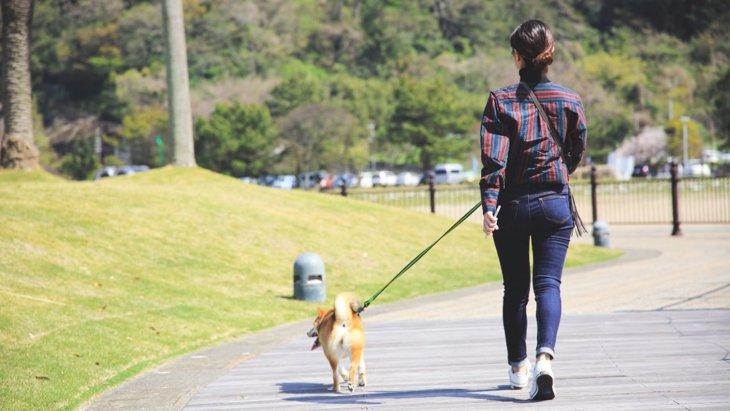 やってない?犬に絶対NGな『散歩の仕方』7つ