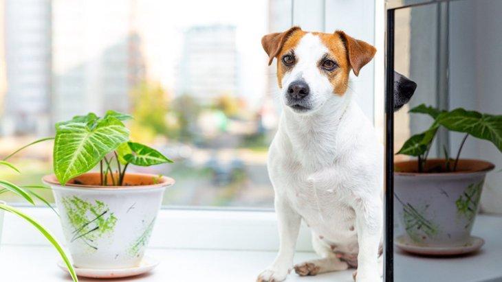犬の飼い主でも育てられる『観葉植物』4選!絶対NGな植物もあるって本当?