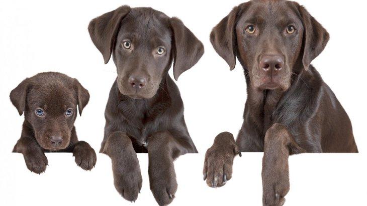 実は同い年かも?犬の年齢を簡単に人間換算する方法!