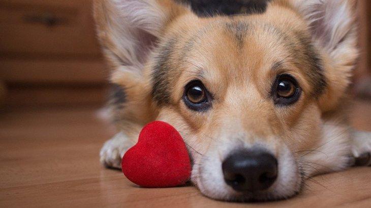 犬も人と同じように『恋愛』をしている?