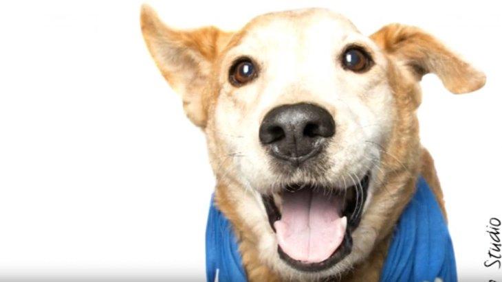 酷い虐待を乗り越えた犬は笑顔でポスターに。元飼い主には有罪判決!
