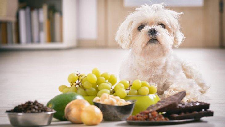 犬が食べてはいけないものを食べた…どのくらいの量なら大丈夫なの?
