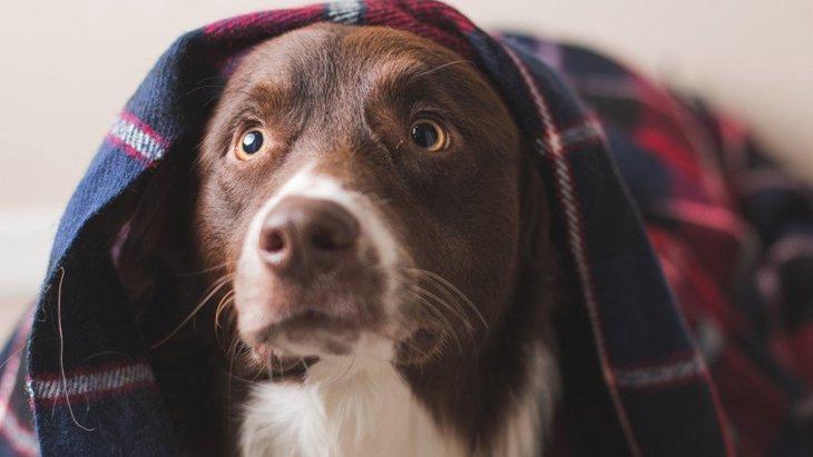 犬に適していない『NGな名前』4選!どうやって名付けるのがいいの?