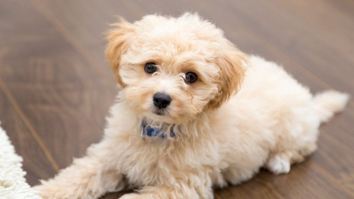 犬の避妊・去勢手術に関するメリットとデメリット