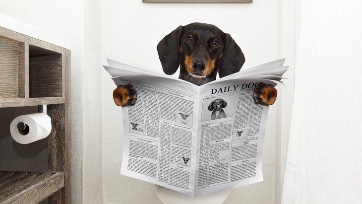 犬用トイレシート おすすめ人気ランキングBEST5
