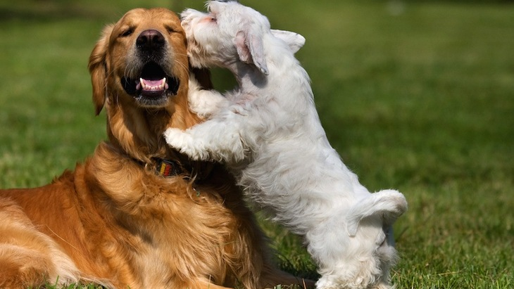 犬はどのように他の犬を「犬だ」と認識しているの?
