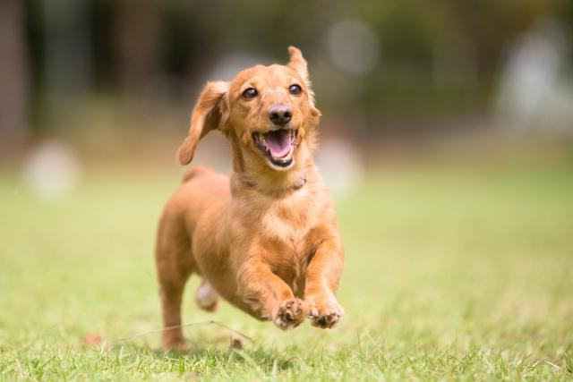 愛犬にグルコサミンで毎日健やか、元気にお散歩!おすすめのサプリメント