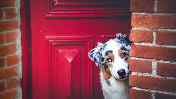 明日は我が身…犬が迷子になってしまう主な原因3つ