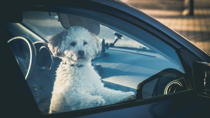 夏の車内に犬を残すのは絶対NG!最悪死亡することも