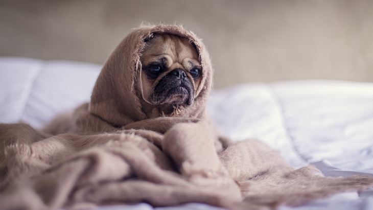 犬用フェロモン「DAP」がストレスや問題行動に効果アリ!