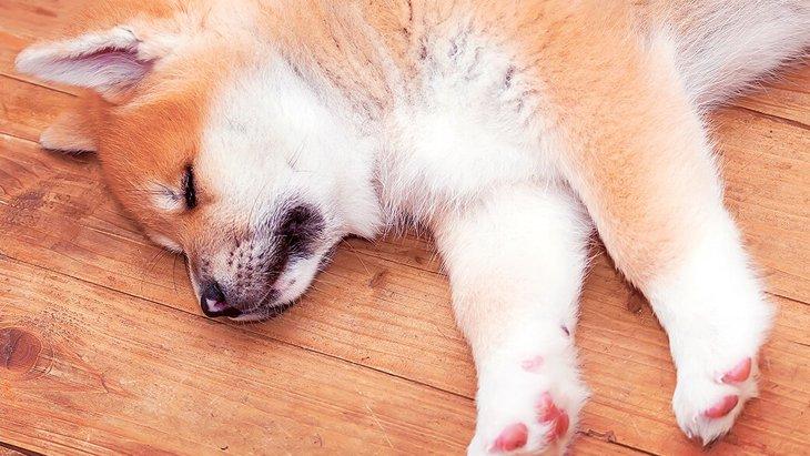 犬の寝ている位置でわかる飼い主への気持ち5選