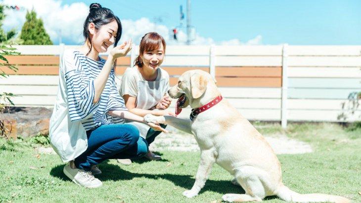 『人懐っこい犬』にはこんな特徴があった♡よく見せる行動や仕草5選