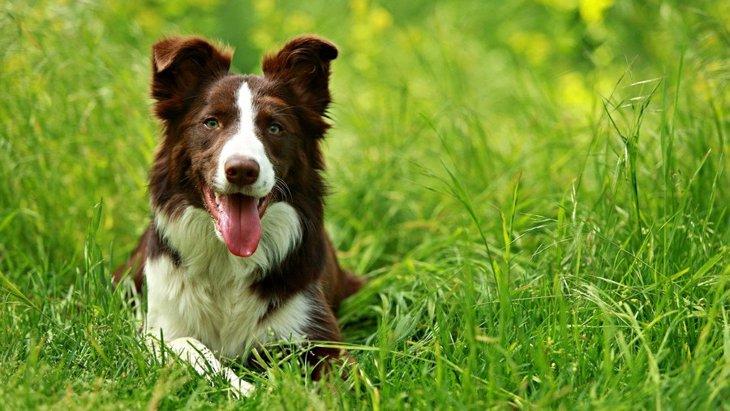犬が食べてしまうと危険な『春の野草』5選