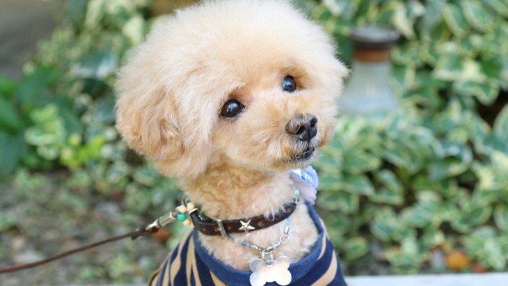 犬をモチーフにしたピアス!オシャレで可愛い人気のおすすめ商品4選