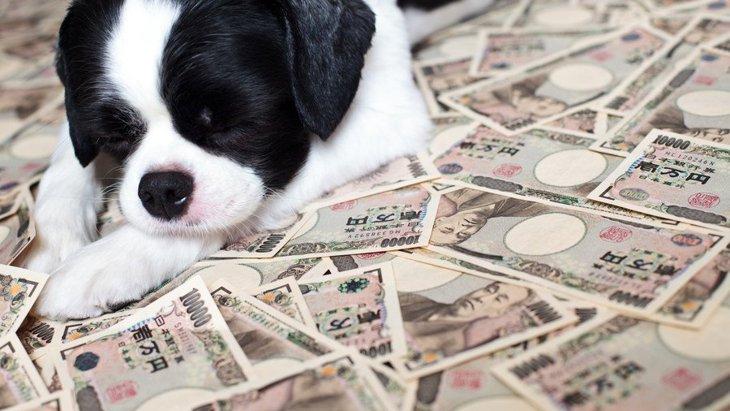 犬を飼うのにかかるお金はいくら?月々の費用から生涯費用まで