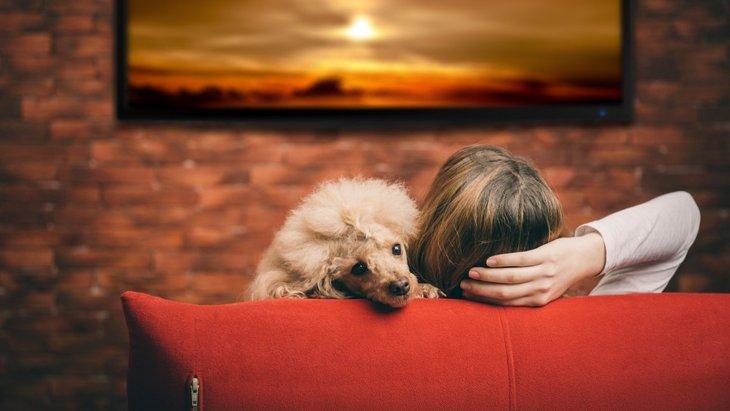 犬のお留守番中、テレビはつけておいた方が良いの?