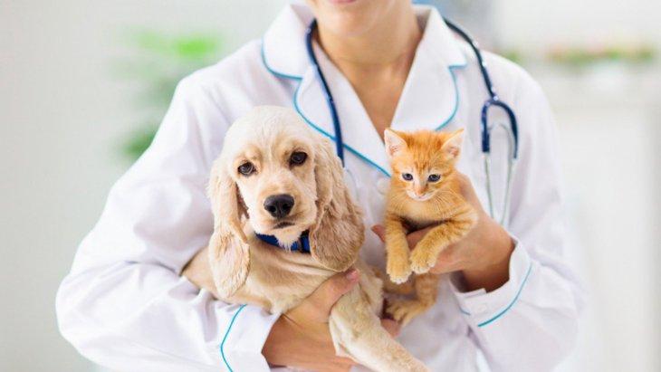 「ペットの健康管理」他の飼い主さんはどうしてる?実態調査で明らかに