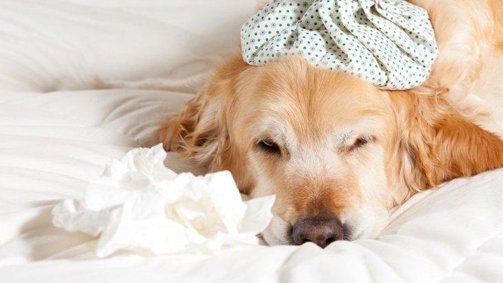 国内初、犬猫の感染症で60代女性が死亡…飼い主にできることとは
