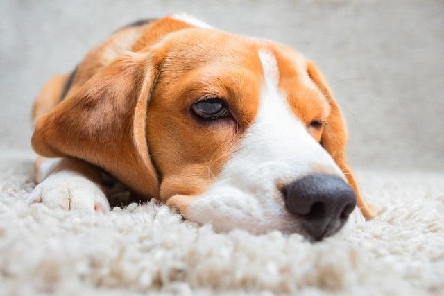 犬の好きなことと嫌いなこと それぞれの個性を理解する大切さ